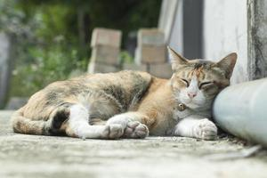 süße Katze schläft foto