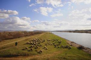 Hirten und Hes Schafe foto