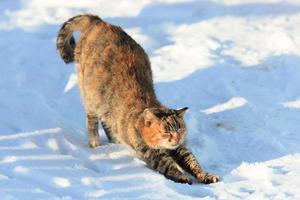 Katze. foto