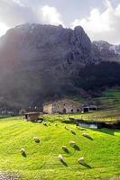 typisches baskisches Bauernhaus mit Schafen im Atxondo-Tal foto