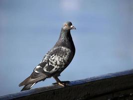 Vogel [1] foto
