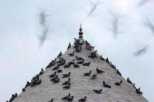 Taube und Minarett foto
