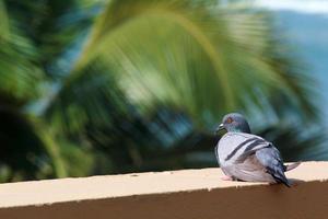 Taube sitzt auf einem Felsvorsprung foto