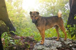 Hund, der auf Bergen geht foto