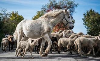 Pferd und Schafe foto