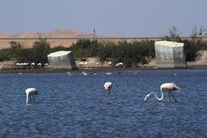 Flamingos bei Swakopmund in Namibia