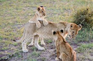 Massai Mara - Kenia foto