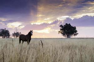einsames Pferd im Fahrerlager bei Sonnenuntergang foto