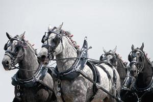 Team von Pferden foto