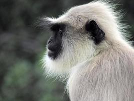 Affengeschäft foto