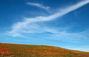 Kalifornische Mohnblumen mit Cirrus Cloudstreaked Himmel foto