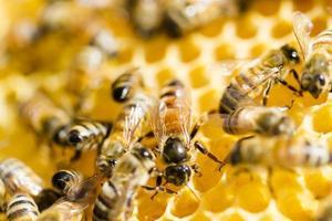 Bienenzucht foto
