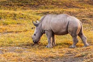 Tiere in Kenia foto