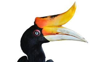 Nashornvogel foto