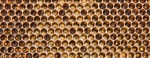 Larven die Zukunft der Bienen foto