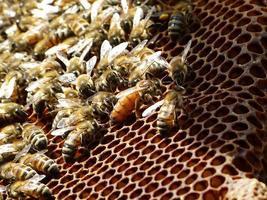 Nahaufnahme von Bienen foto