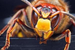 Insekt foto