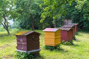 Imker arbeitet mit Bienen und Bienenstöcken am Bienenhaus. foto