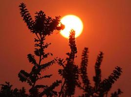 Hummel auf Bleipflanze bei Sonnenuntergang foto