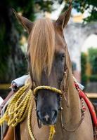 Pferd Nahaufnahme 6 foto