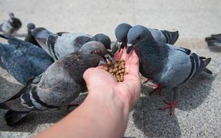 menschliche Hand, die den Vogel füttert foto
