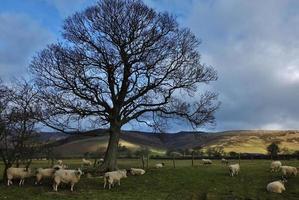 Derbyshire Landschaft foto