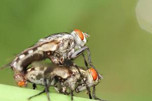 Käfer und kleines Insekt foto
