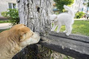 unerwartetes Treffen eines Hundes und eines streunenden Kätzchens. foto