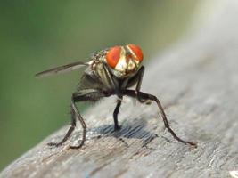Fliege sitzt auf Holz hautnah