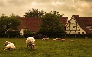 Landszene foto