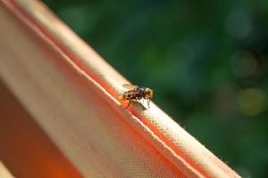 Wespe ruht auf einem Tuch im Garten