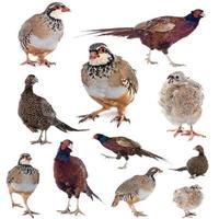 Spiel Vögel foto