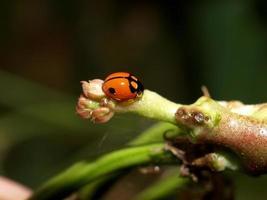 Insekteninsekt