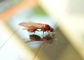 Termite weiße Ameise foto