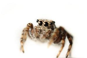 kleines Käfer-Makro