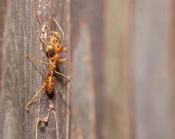 Ameise bewegte Puppe aus der Nähe