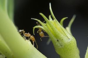 fleißige Ameise herumlaufen auf der Suche nach Nahrung. foto