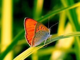 steiles Insekt foto