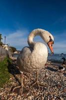 weiße Ente auf blauem Himmel als Hintergrund foto