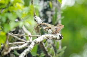 Eidechse auf dem Baum foto