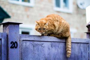 vorsichtige Katze auf einem Zaun