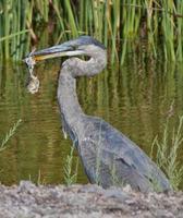 Vogel füttert einen Fisch foto