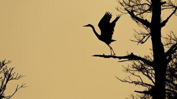 Blue Heron Silhouette foto
