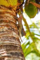 Eidechse auf tropischem Wald foto