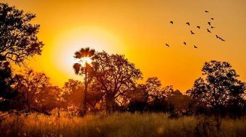 afrikanischer Busch Sonnenuntergang foto