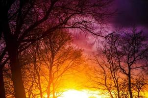 Baumschattenbild während des Sonnenuntergangs foto