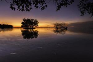 Schattenbildbaum mit Sonnenuntergang foto