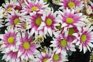 Blume foto
