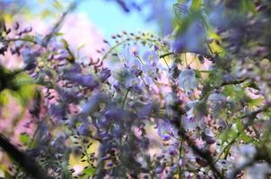 Blumen foto