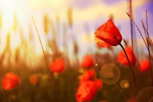 Blumen. foto